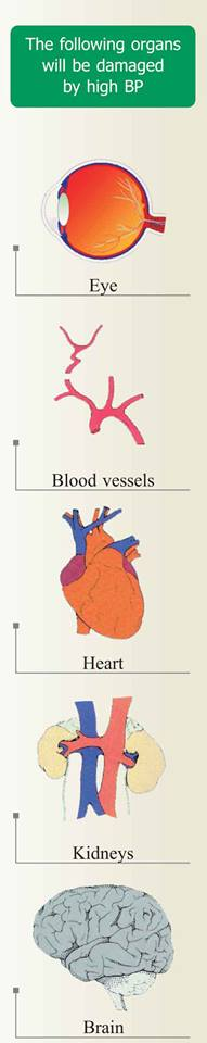 The following organs will be damaged by high blood pressure.